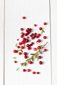 Cranberries (Vaccinium vitis-idaea), twig and leaves on white wooden table