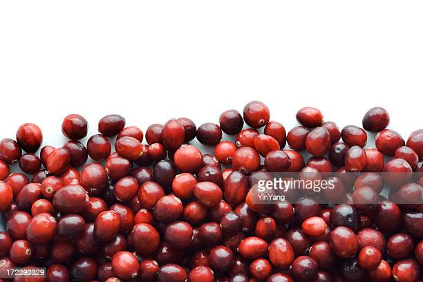 Cranberry encadrent frontière de fruits automne rouge Berry Fruit minier