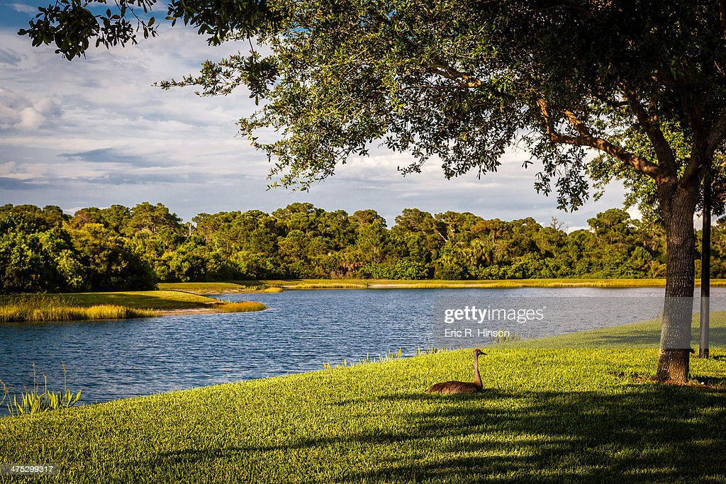 Crane and lake