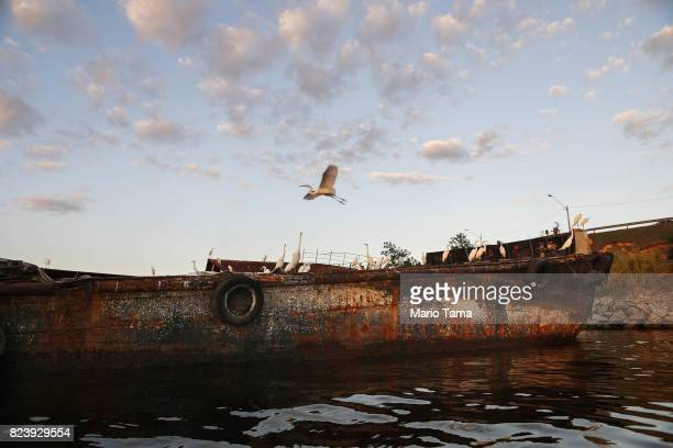 A crane flies past the remains of a ship along the coast of the polluted Guanabara Bay on July 25 2017 in Niteroi Brazil Nearly one year after Rio...