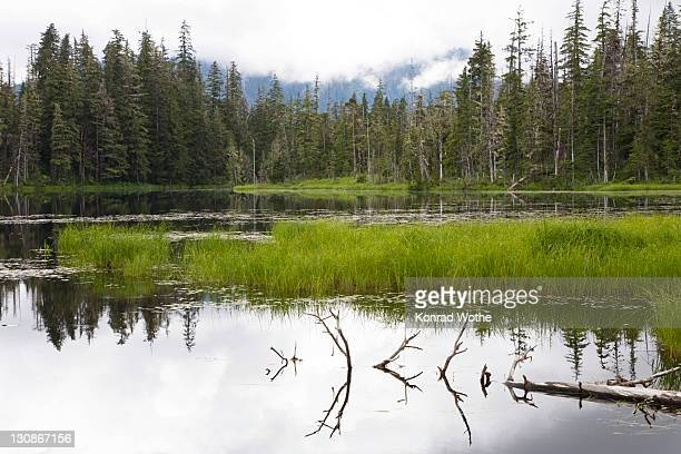 Crane Lake near Petersburg, Tongass National Forest, Mitkof Island, Southeast-Alaska, Alaska, USA, North America