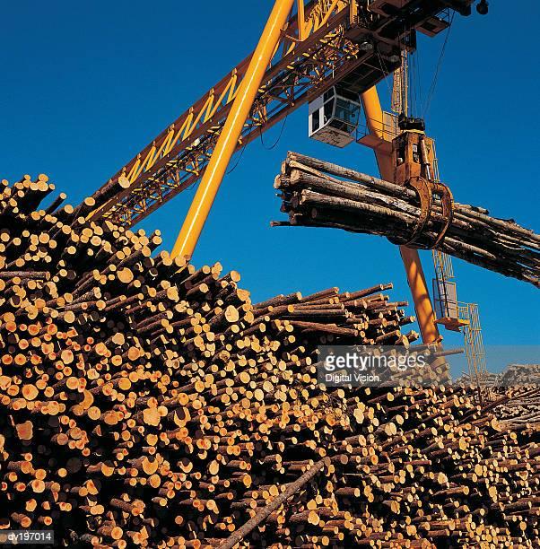 Crane lifting cut timber