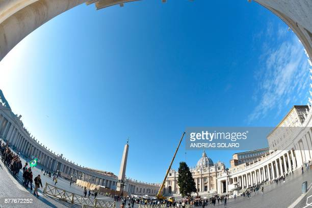 A crane lifts a Christmas tree arrived early today on a truck from Poland on November 23 2017 at St Peter's square in Vatican This year's the...