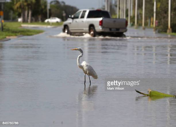 A crane stands on a road flooded by Hurricane Irma on September 11 2017 in Estero Florida Hurricane Irma made landfall in the Florida Keys as a...