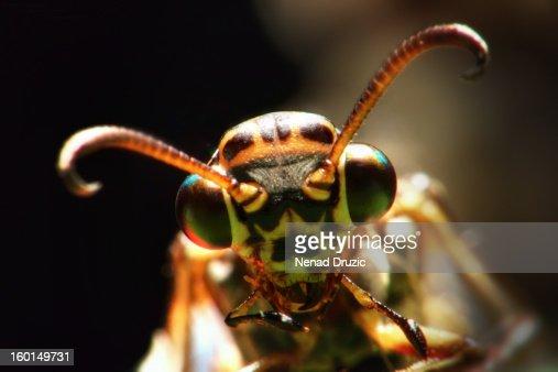 Crane-fly : Photo