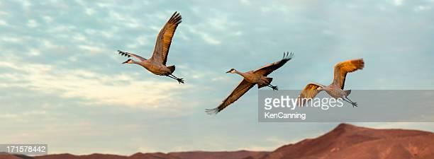 Cranes im Flug
