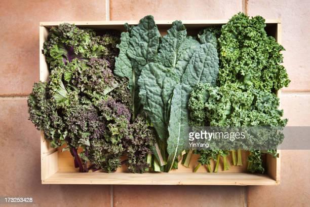 Holzkiste mit frisch geernteten Grünkohl Gemüse Sorten Hz