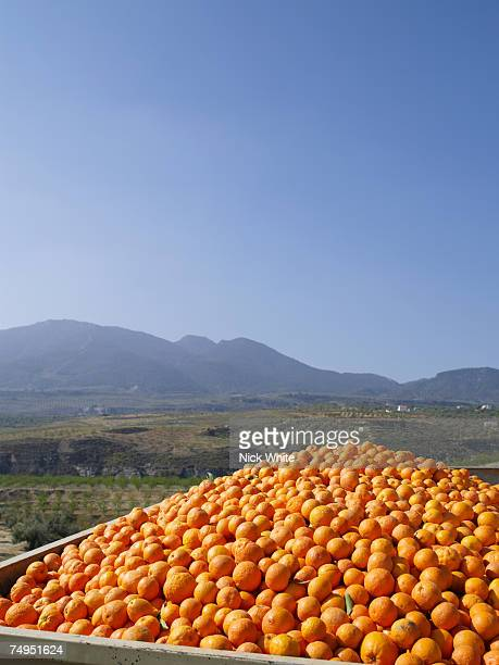 Crate of oranges in rural landscape