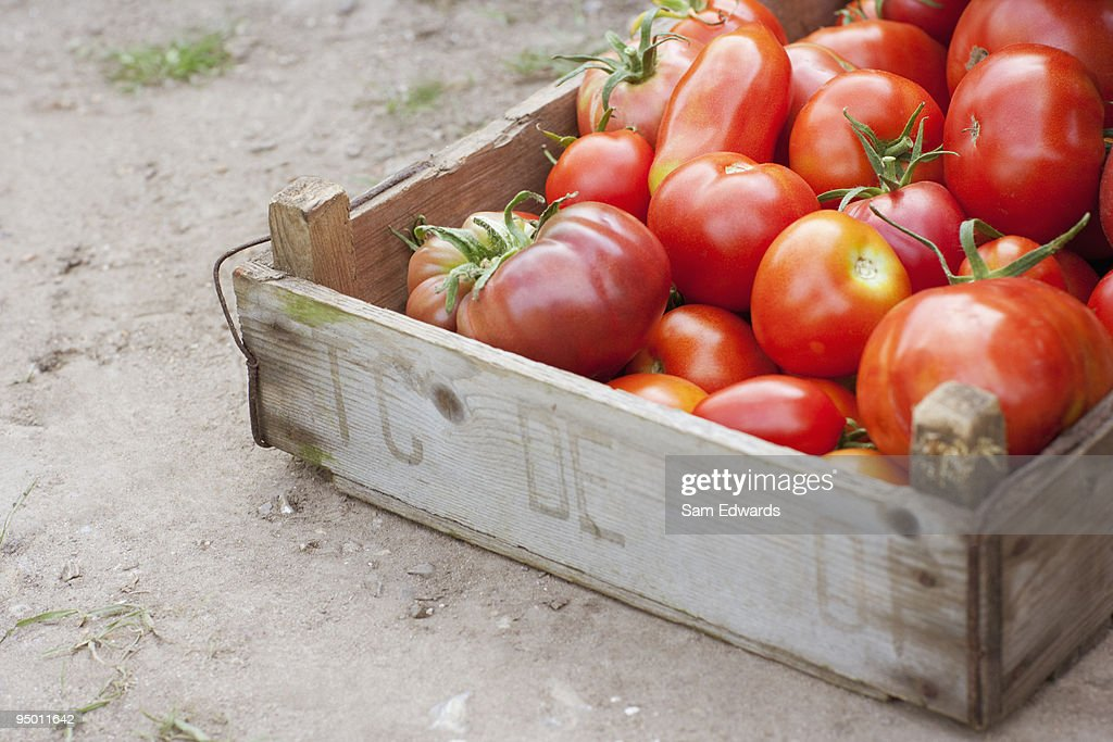 Crate of organic tomatoes