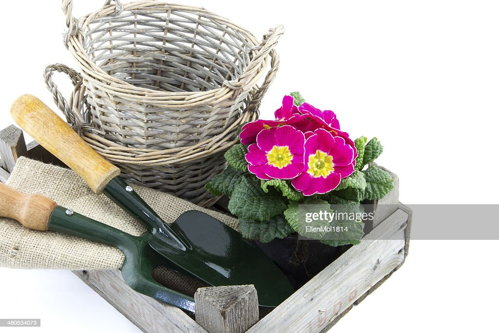 crate with baskets, primrose and garden utensils : Stock Photo