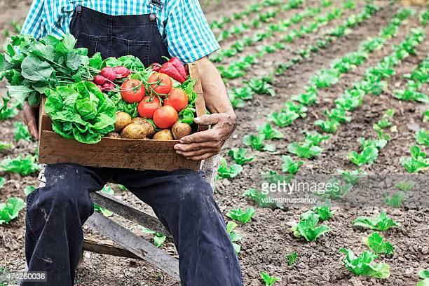 ケージに野菜