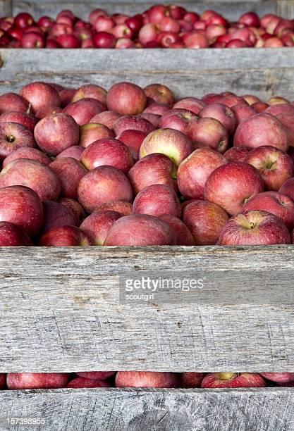 Casse di mele