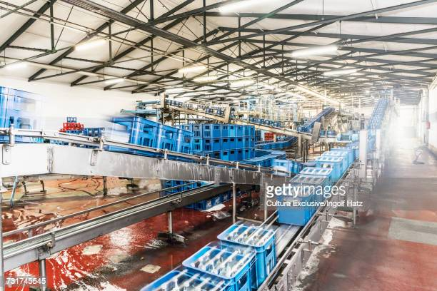 Crates of bottles on conveyor belt in bottling facility, bottling mineral spring water