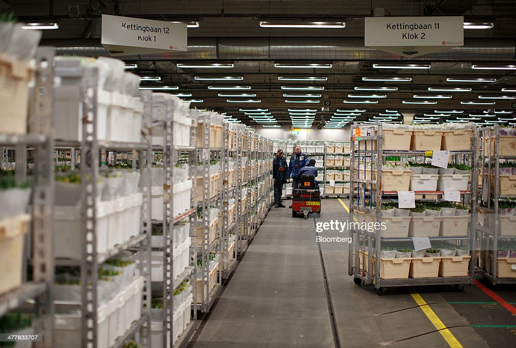 Crates of flowers sit in a refrigerated storage room before distribution at FloraHolland, the largest flower trade center in the world, in Aalsmeer, Netherlands, on Tuesday, March 11, 2014. The Netherlands' flower and plant exports, the world's biggest, fell 2.3 percent last year as declining consumer purchasing power was compounded by cold spring weather in Europe and a summer heat wave that hurt sales. Photographer: Jasper Juinen/Bloomberg via Getty Images