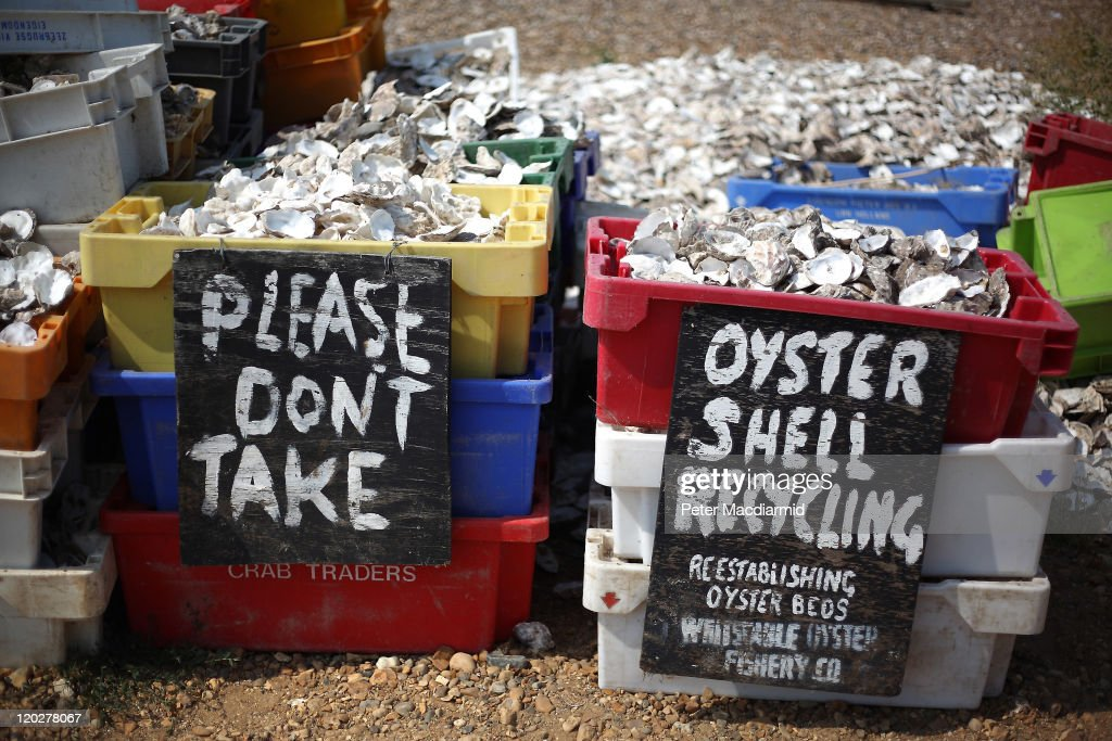 Crates of oyster shells wait for collection from the beach on August 3, 2011 in Whitstable, England. Parts of southern England are experiencing high summer temperatures.