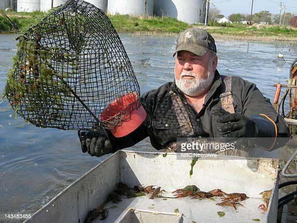 Crawfish farmer David Savoy harvests crawfish from ponds near Church Point LA on March 13 2008