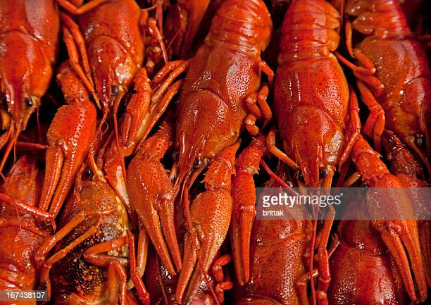 Crayfish background. Swedish traditional food.