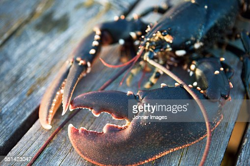 Crayfish on jetty