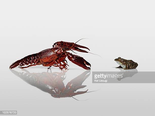 A crayfish