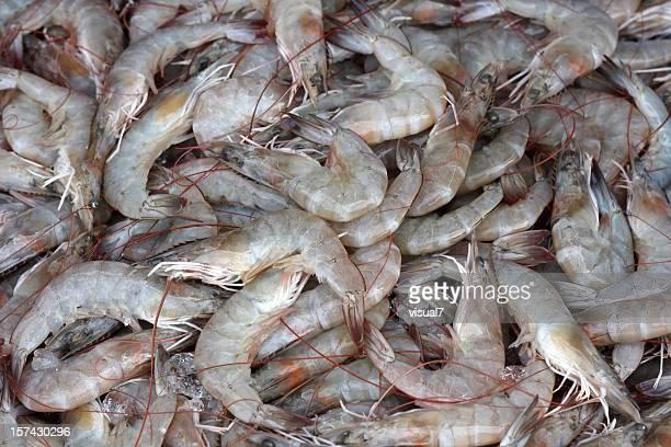 Langouste, des crevettes, des crevettes