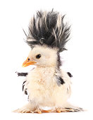 This is a crazy chick with even crazier hairstyle.