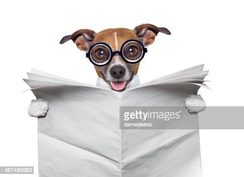 crazy Hund liest Nachrichten : Stock-Foto