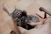 Crazy Kitten Girl