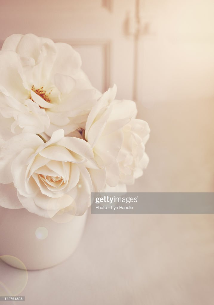 Cream roses in vase : Stock Photo
