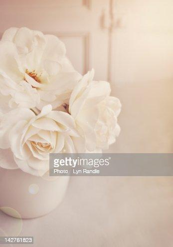 Cream roses in vase : Stock Photo