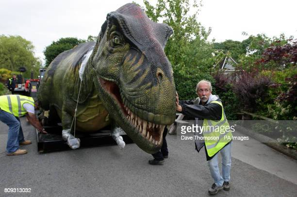 Creative Director of Billings Productions Inc Sean Dickson from Mckinney Texas guides a mechanical tyrannosaurus rex into position at Chester Zoo...