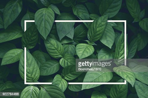 creative layout, green leaves with white square frame, flat lay, for advertising card or invitation : Foto stock