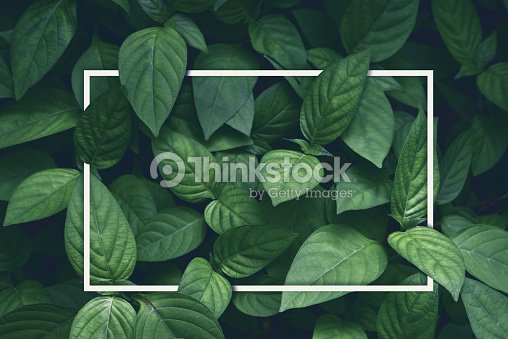 creative layout, green leaves with white square frame, flat lay, for advertising card or invitation : Stock Photo