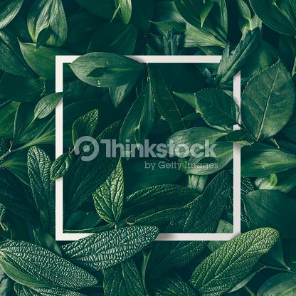 Creative layout made of flowers and leaves with paper card note. Flat lay. Nature concept : Stock Photo