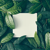 Creative layout made of green leaves with paper card note. Flat lay. Nature concept