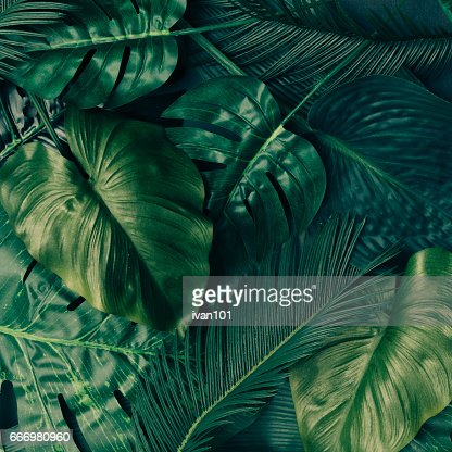 Creative tropical green leaves layout. Nature spring concept. Flat lay. : Stock Photo