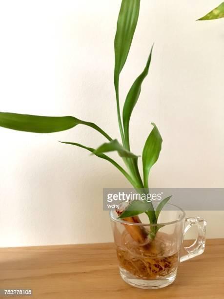 Creative Vases