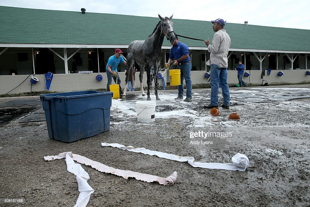 Creator is washed in the barn area during the morning training for the 2016 Kentucky Derby at Churchill Downs on May 04, 2016 in Louisville, Kentucky.