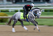 Creator runs on the track during the morning training for the 2016 Kentucky Derby at Churchill Downs on May 04 2016 in Louisville Kentucky