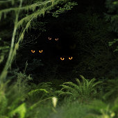 Creatures peering out from forest, night (Digital Composite)