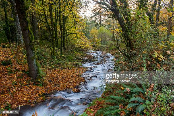 Creek at Wahkeena Falls in the Columbia River Gorge near Portland in the state of Oregon USA
