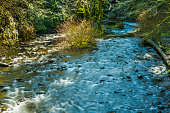 Creek in Oregon's Columbia River Gorge with soft flowing water