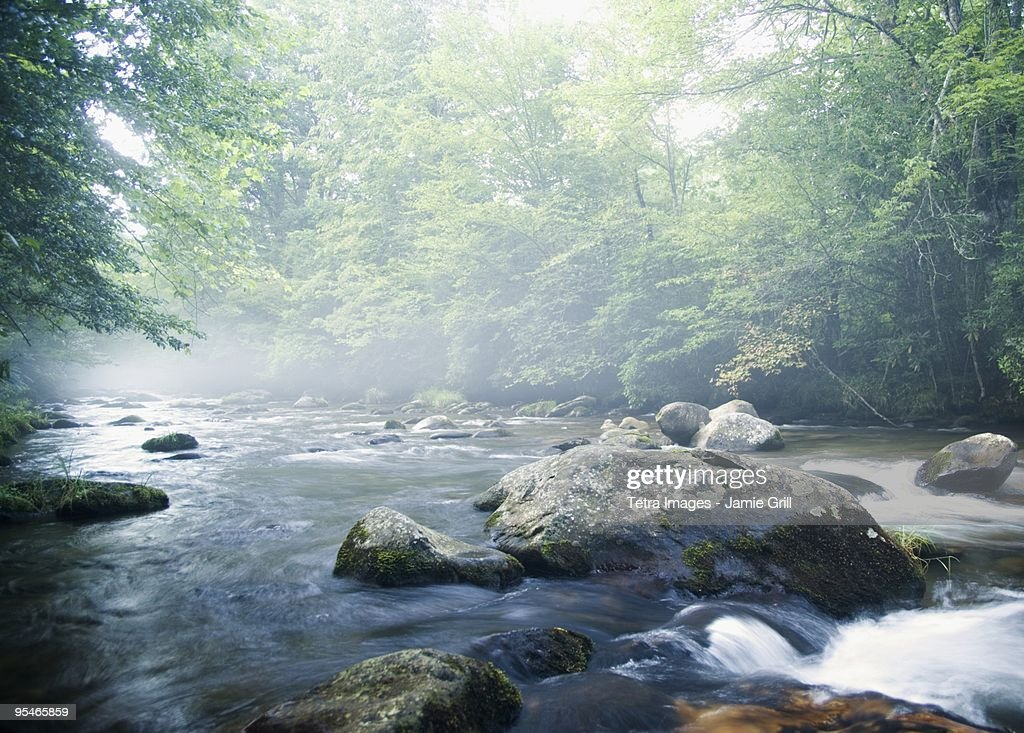 Creek in Smokey Mountain National Park