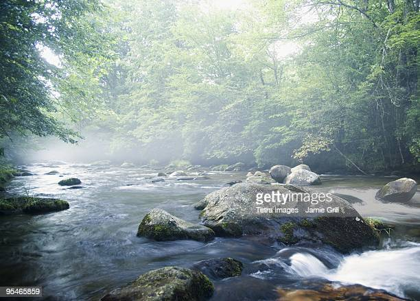 Creek in Smokey Mountain National Park