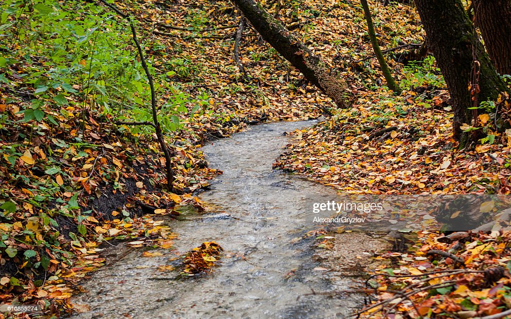 creek in the autumn forest : Stock Photo