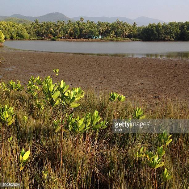 Creek Landscape During Low Tide