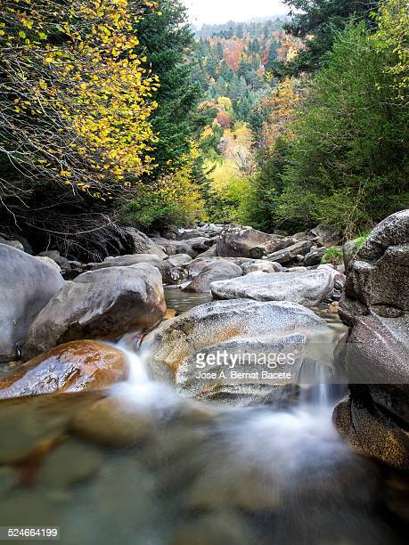 Creek of high mountain in a forest in autumn