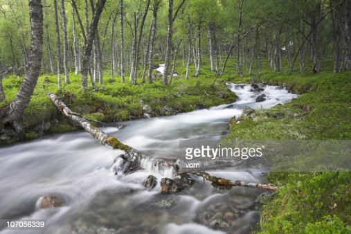 Creek with birches
