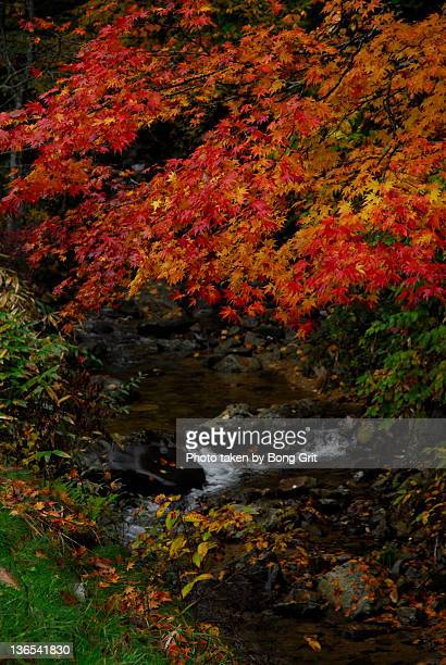 Creek with colored leaves