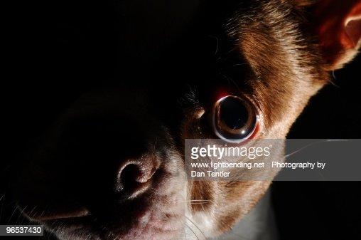 Creepy dog : Stock Photo