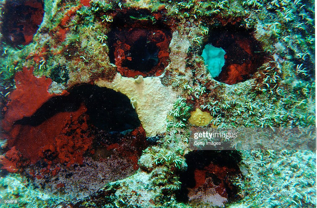 Cremated remains that were added to the concrete of an artificial reef unit are seen underwater in this undated photo from Eternal Reefs Inc The...